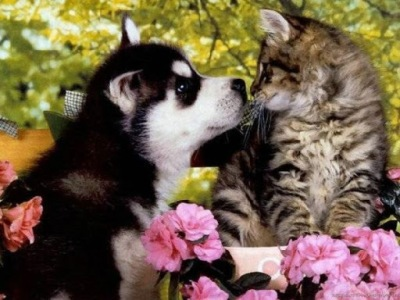 very-cute-dogs-cats-together-moments